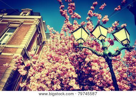 Beautiful Cherry Tree Blossom