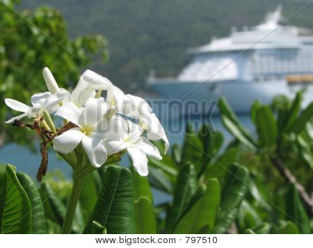 wild flowers with ship