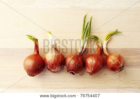 Growing Shallot