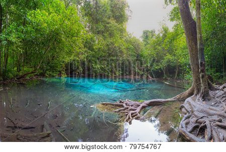 Unseen Emerald Pool locate in deef forest of national park