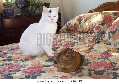 cat anf pig