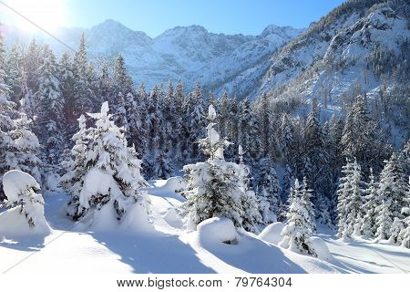 Snowy Winter Landscape In The Alps