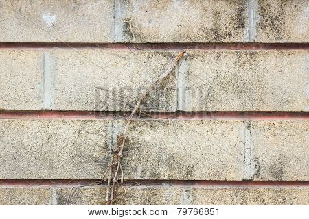 Old Grunge Wall With Tree Root