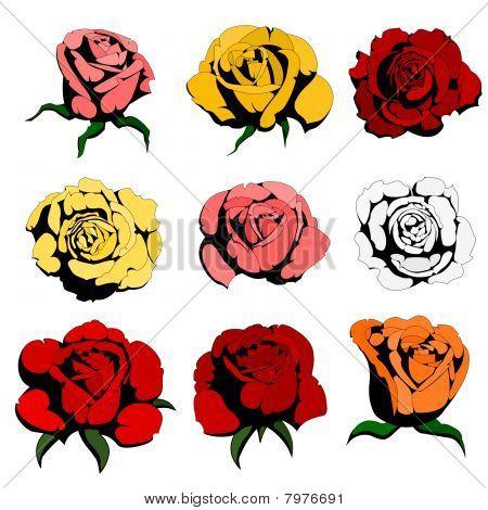 nine color roses
