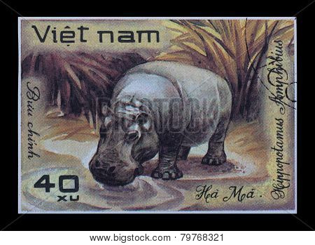 Post Stamp. Hippopotamus Amphibius