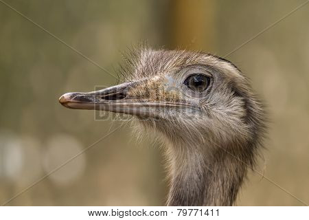 Head of Greater Rhea