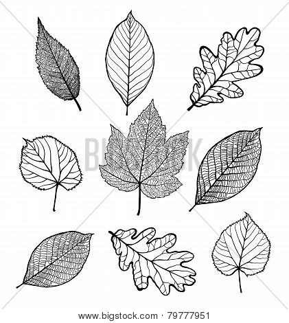 Set of leaves