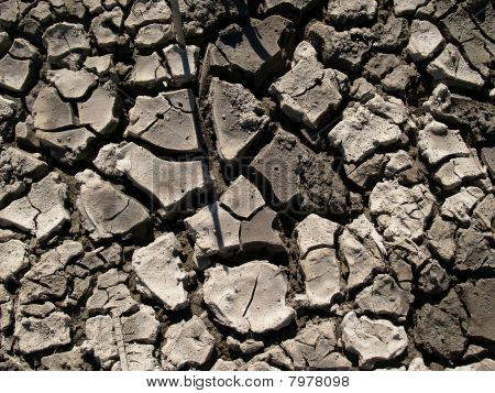 Patterns in parched and cracked mud.
