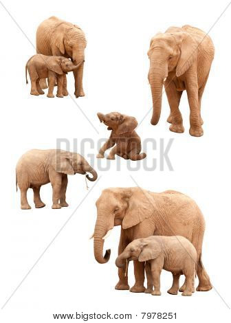 Set Of Elephants Isolated