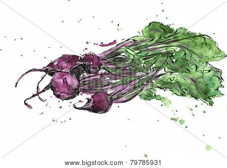 Hand drawn beets