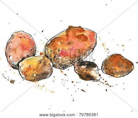Hand drawn potatoes