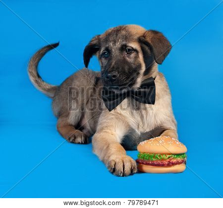 Thin Yellow Puppy In Bow Tie Lying On Blue