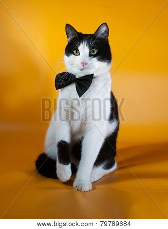 White And Black Cat In Bow Tie Sitting On Yellow