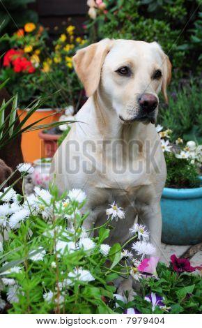 pretty dog amongst the flowers