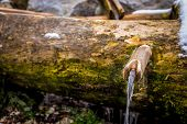 image of trough  - old water fountain in a wooden trough - JPG
