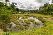 pic of mud-hut  - Stunning landscape and bright rice fields in Tana Toraja - JPG