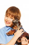 stock photo of pullovers  - Beautiful brown Yorkshire Terrier in pullover with smiling boy on white background - JPG