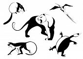 pic of opossum  - Decor animal silhouette illustration collection for design - JPG