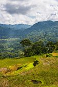 image of mud-hut  - Stunning landscape and bright rice fields in the remote region of  Tana Toraja - JPG