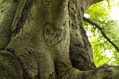 image of initials  - trunk engraved with hearts and initials on a sunny day