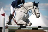 image of horse face  - sport horse jumping over a barrier on a obstacle course - JPG
