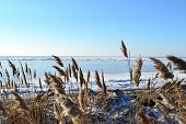 pic of windy weather  - Marine winter landscape in sunny weather - JPG