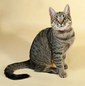 foto of yellow tabby  - Tabby kitten with yellow eyes sitting on yellow background - JPG