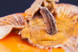 stock photo of khakis  - over a fruit of khaki - JPG