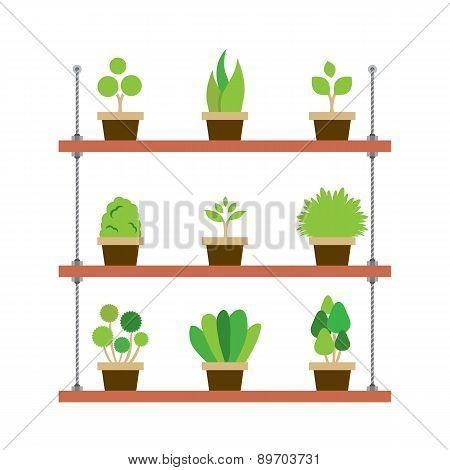 Pot Plants Gardening Concept.