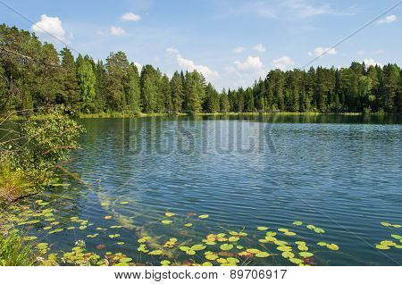 Lake in wood