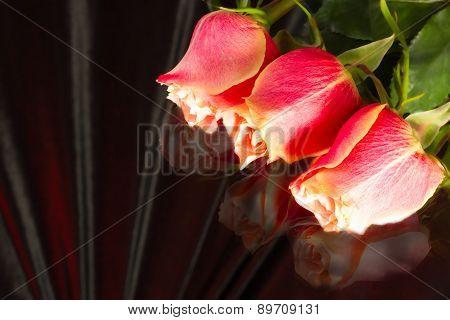 Beautiful Wild-growing Scarlet Roses