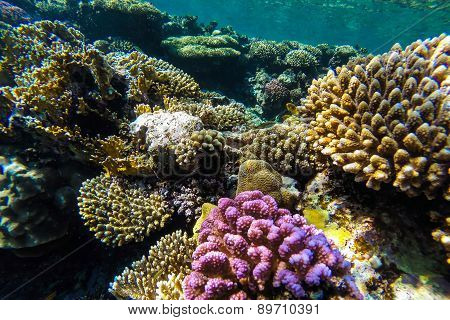 Red Sea Underwater Coral Reef