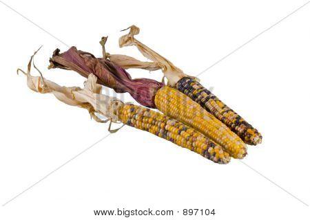 Three Indian Corn Alpha