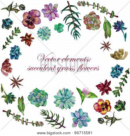 Vector watercolor elements: succulent grass, flowers, leaves.