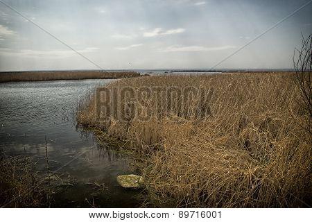 reed spills