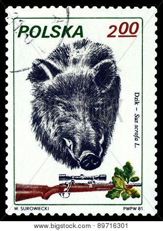 Vintage  Postage Stamp. Boar.