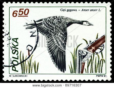 Vintage  Postage Stamp. Greylag Goose.