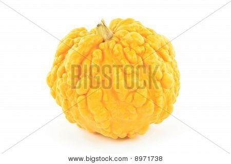 Yellow Pebbled Skin Squash.