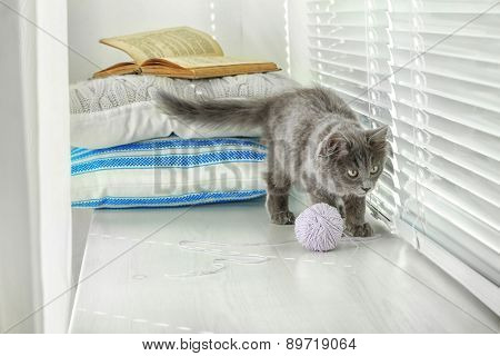 Cute gray kitten on windowsill at home