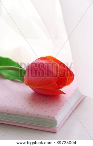 Beautiful red tulips and pink album on windowsill, closeup