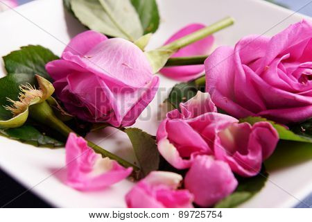 Beautiful pink roses in white plate, closeup