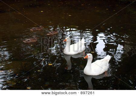 White Couple