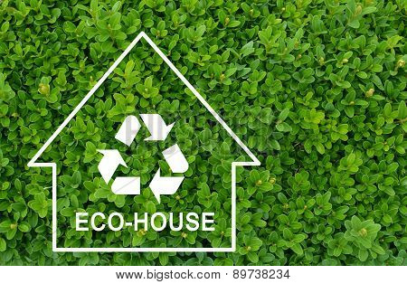 Eco house concept on green shrub background
