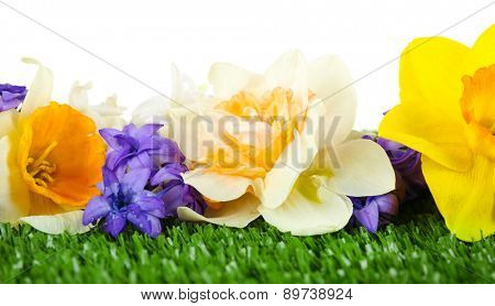 Beautiful bright flowers on green grass on light background