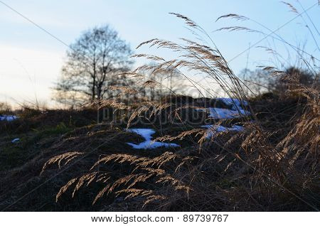 Snow And Dry Grass, South Bohemia