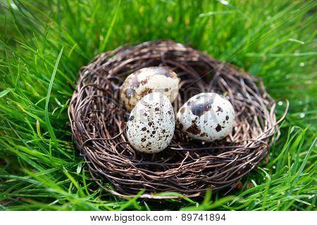 Nest with bird eggs over green grass background