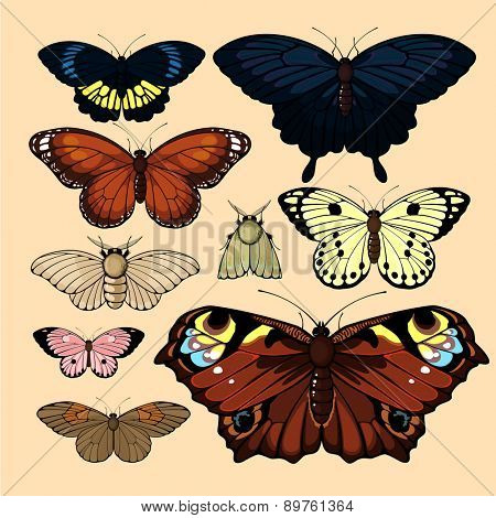 Set of realistic images of beautiful butterflies and moths, isolated on neutral background (raster version)