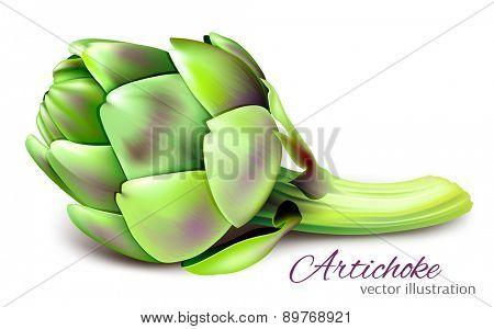 Artichoke. Vector illustration.