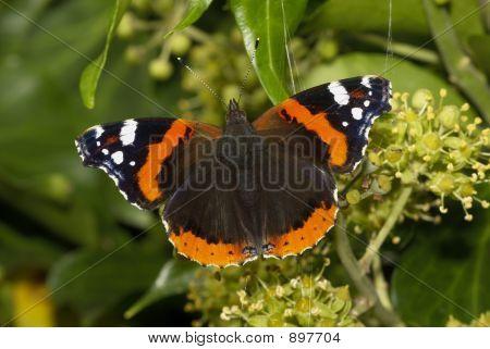 Butterfly54