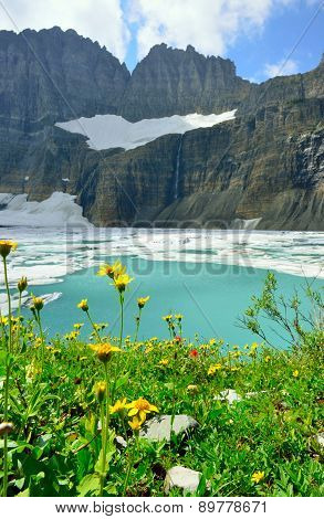 Wild Flowers By Grinnell Glacier In Many Glaciers, Glacier National Park, Montana